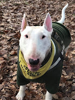 Basingstoke Charity Dog Walking
