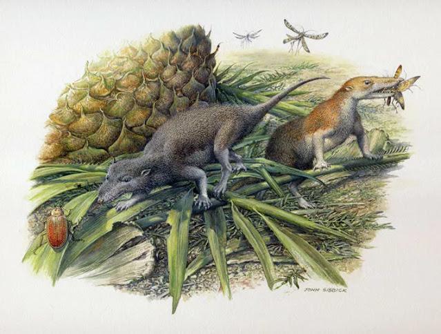primeiros mamíferos