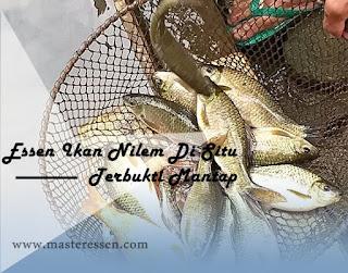 Essen Ikan Nilem Khusus Di Situ