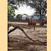 Criança de 10 anos morre após cair de cavalo em São Bento do Una, PE