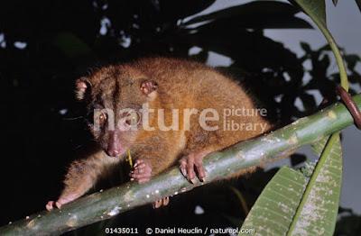 Cuscus world