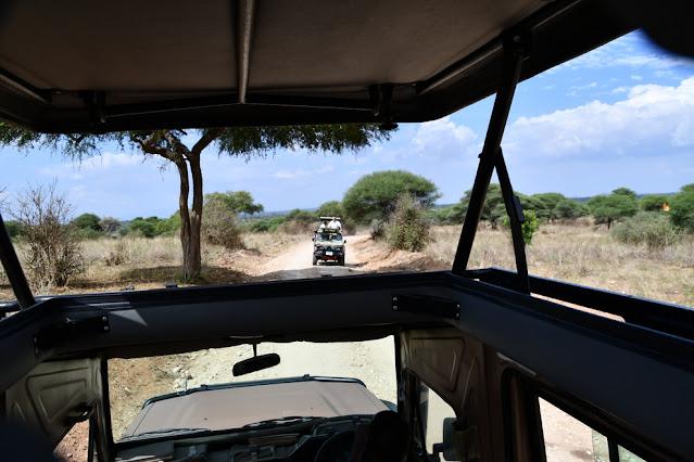 Suricata Safaris