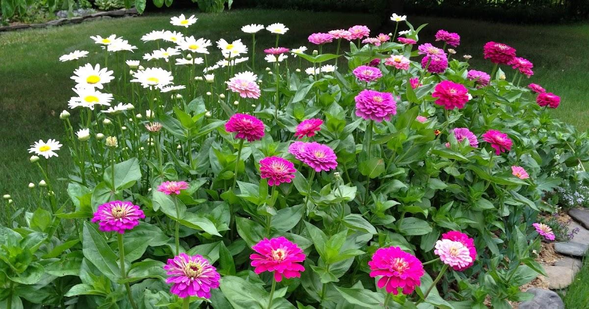 Caroline Plouff Best Cut Flowers To Grow At Home Garden