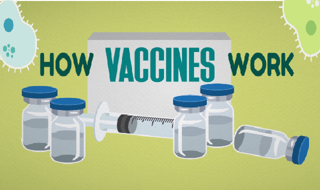 How Vaccines Work #infographic