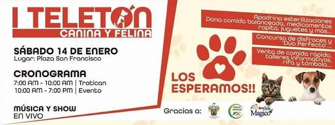 I Teletón canina & Felina, Arequipa - 14 de enero