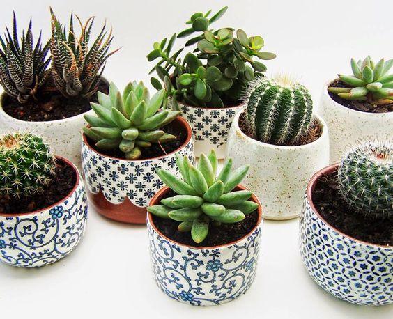Cantinho verde ideias para ter plantas dentro de casa for Vivero de cactus en chile