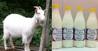 Το κατσικίσιο γάλα είναι το καλύτερο γάλα και συμβάλει στην θεραπεία πολλών ασθενειών
