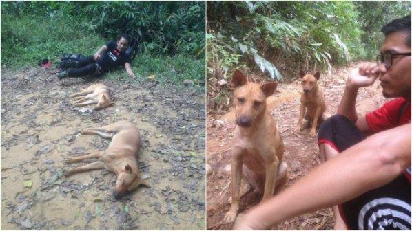 Siapa Sangka Pendakian Gunung Nuang Mereka 'Diselamatkan' Oleh 2 Ekor Anjing Yang…