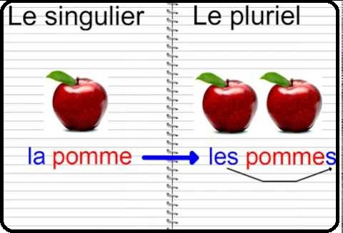 كيفية تحديد المذكر والمؤنث في اللغة الفرنسية le pluriel et le singulier