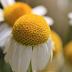 «Το ταπεινό χαμομηλάκι»: Ένα παραμύθι για την αυτοεκτίμηση