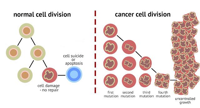 sel kanser membiak