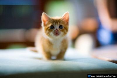 صور صور قطط كيوت 2020 خلفيات قطط جميلة جدا cats.png