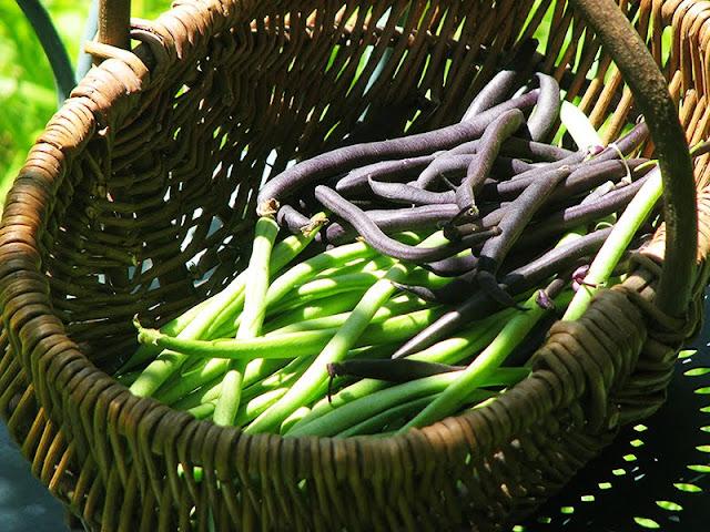 Mélange de haricots du jardin
