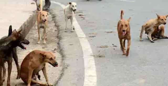 dogs-in-street