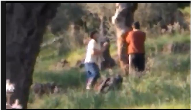 Θα ξεπαστρέψουν τα πάντα! Τραγικές εικόνες με τους μουσουλμάνους στην Λέσβο – Δεν τους σταματά κανείς (ΒΙΝΤΕΟ)