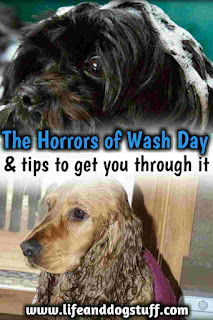 The Horrors of Dog Wash Day - Tips to Get You Through It.