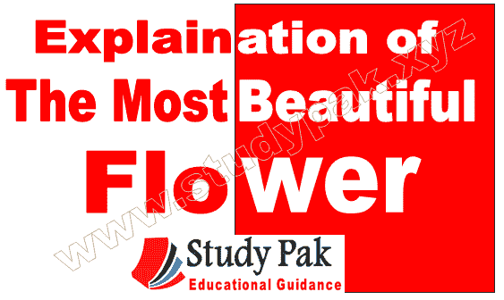 Explanation of the poem the most beautiful flower all stanza