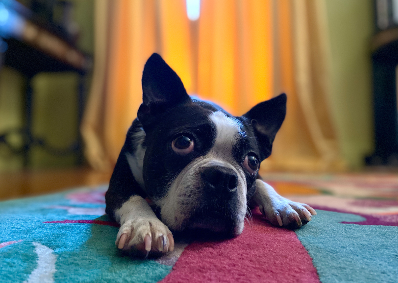 The dual cameras in iPhone 11 work together to create stunning Portrait mode