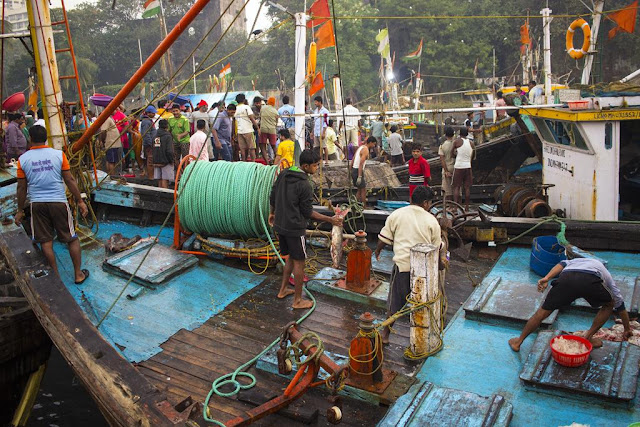 fish, fishing boat, fishermen, sassoon docks, mumbai, india, colourful,