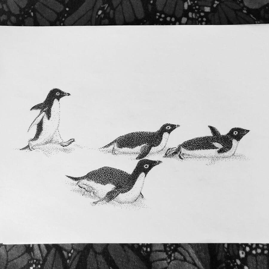 01-Penguins-sliding-María-Lecanda-www-designstack-co