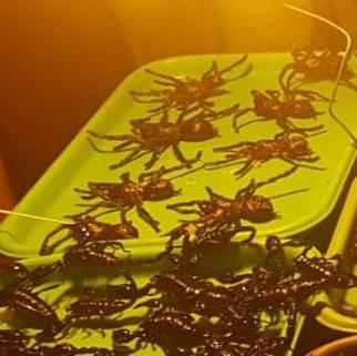Tarantula Goreng di Siem Reap Kamboja