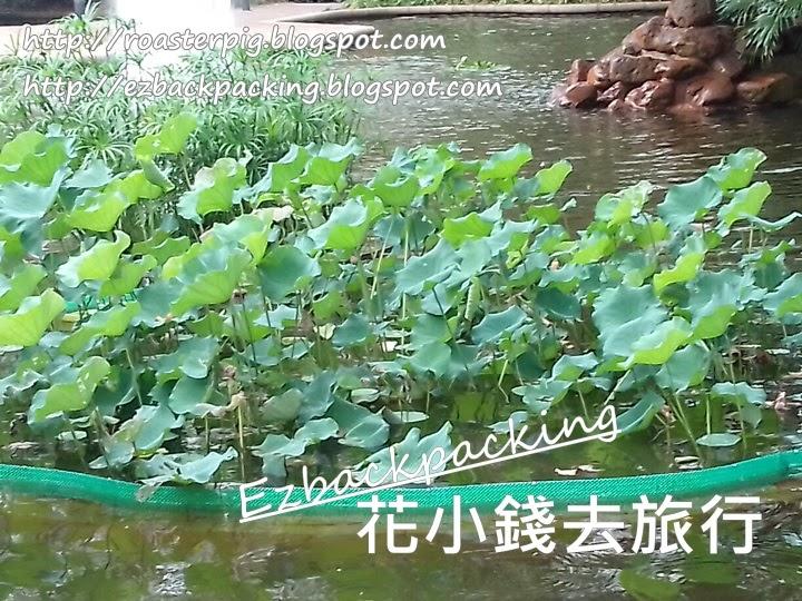 九龍公園荷花池2021