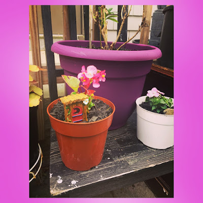 pink begonia container garen plant with fairy garden outhouse decoration