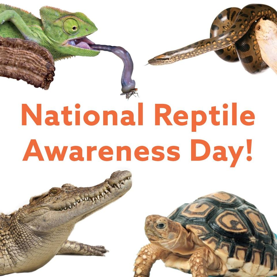 National Reptile Awareness Day Wishes Unique Image