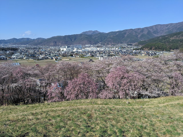 Things to do in Matsumoto in Spring: see cherry blossoms at Koboyama