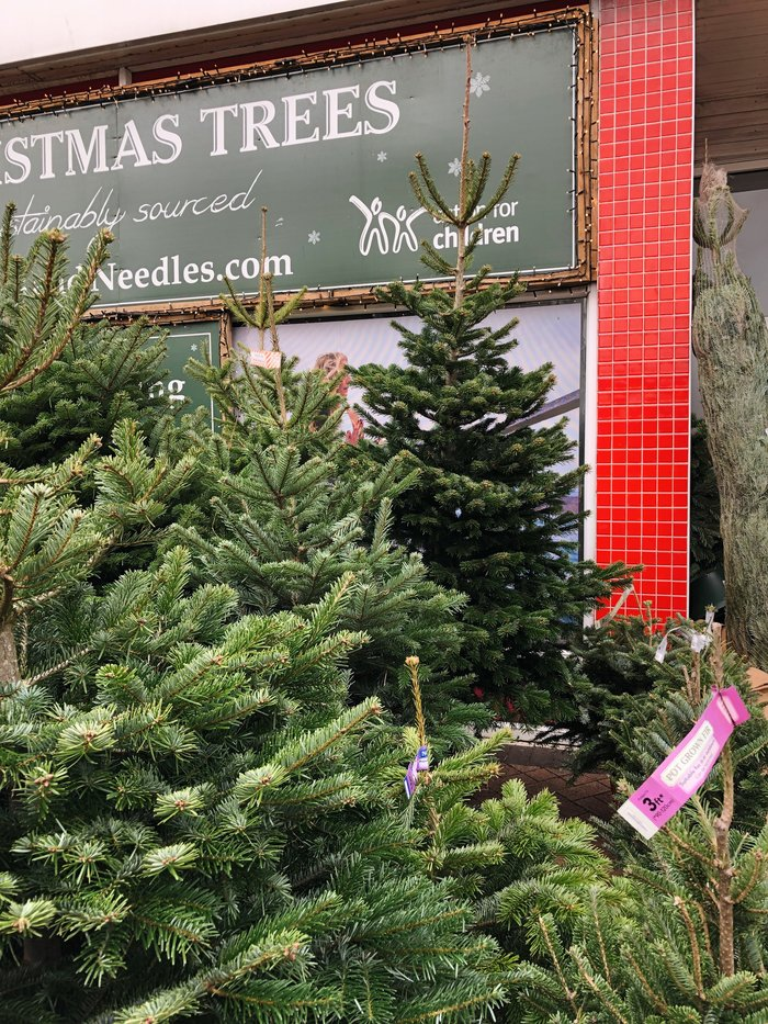Getting our first real Christmas tree - a review of Pines and Needles