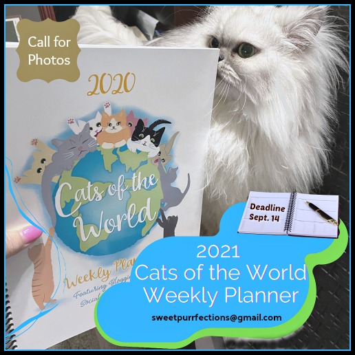 Silver shaded Persian cat with 2020 calendar announcing call for photos for 2021
