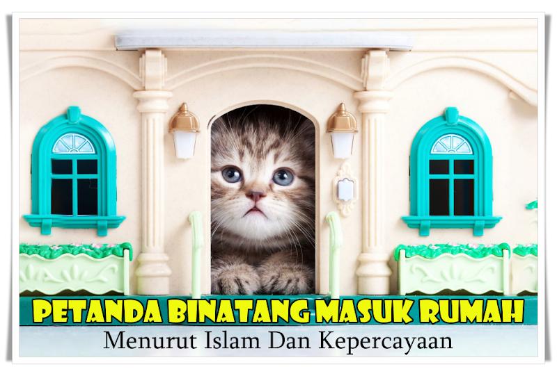 Petanda Binatang Masuk Rumah Menurut Islam Dan Kepercayaan