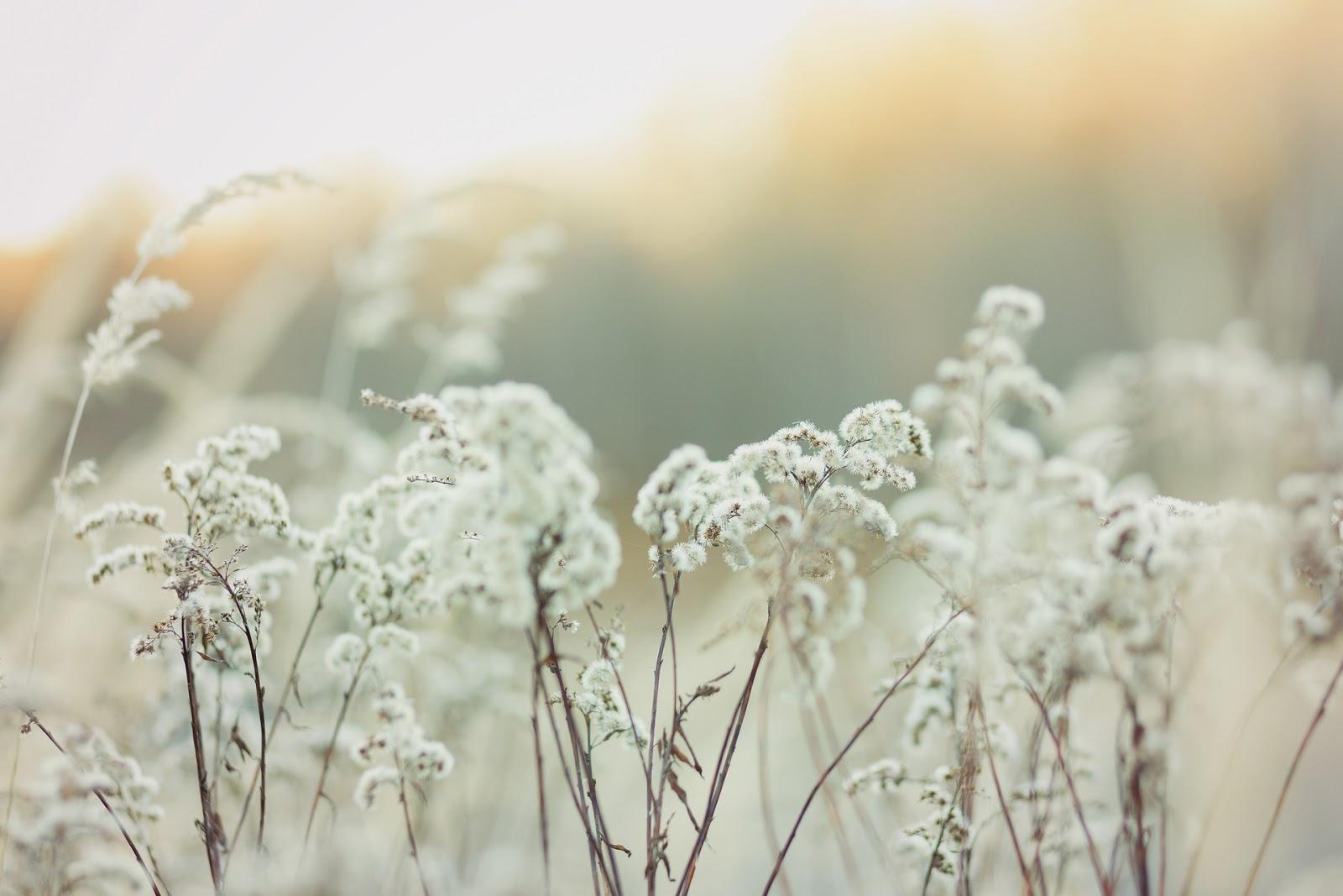 «乘鸞» 作者:雲芨。 閱後心得。 - Miyuri @ Tokyo