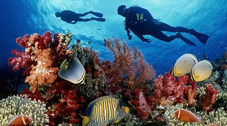 الشعاب المرجانية و طرق حمايتها