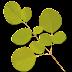 Moringa Oleifera: A Natural Treatment for Diabetes... See More Details