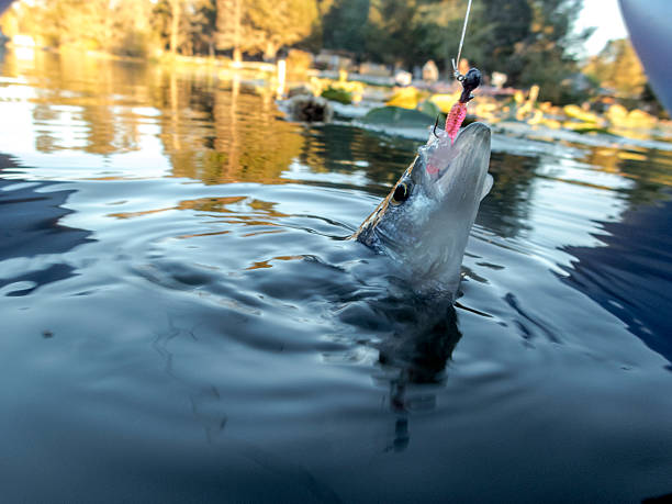 Crappie Fishing Lures - What To Use