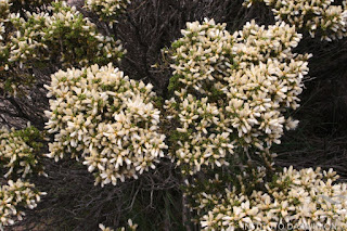 flora del monte lejia