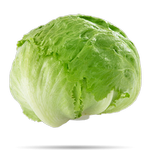 lettuce in spanish