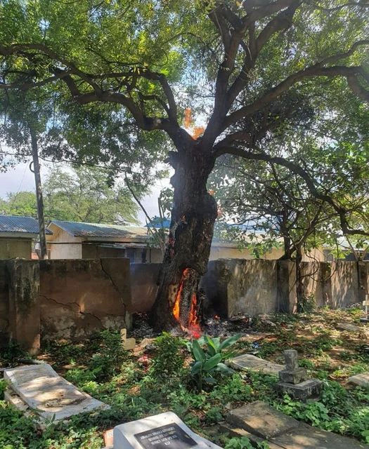 Cemetry Tree bursts to flames magically