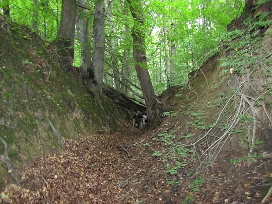"""Wąwóz lessowy w rezerwacie leśnym """"Barania Góra""""."""