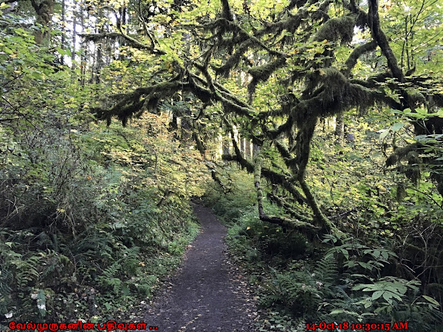 Silver Falls State Park Trail
