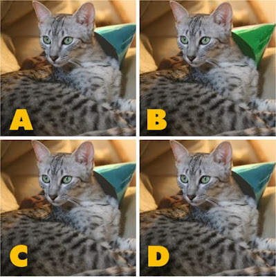 Which image is different? image 15