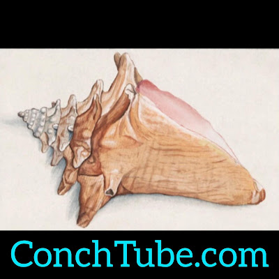 conchtube.com