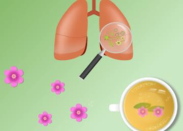 Receita Contra Bronquite: Chá de Verbena