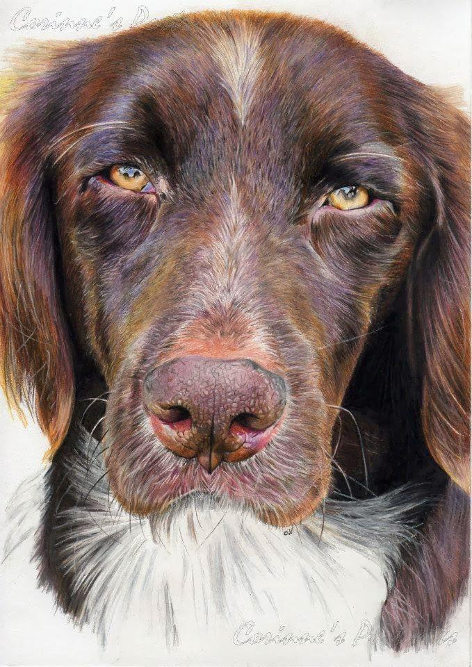 Cosmo Desenho De Um Cachorro Super Realista Drawing A Super
