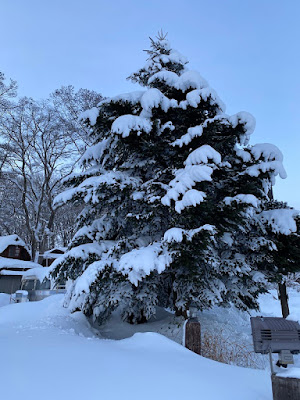 猪苗代湖モビレージ 場内の大きな木 冬は一面の雪