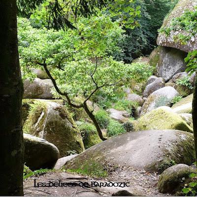 forêt de Huelgoat (29)