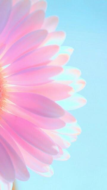 fondos de celulares de flores