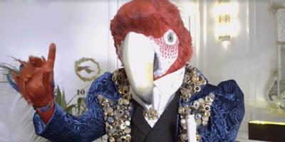 indizi pappagallo cantante mascherato
