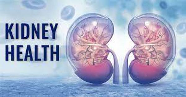 KIDNEY HEALTH: All You Need To Know About Kidney
